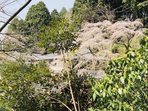 幣立神社 九州 パワースポット